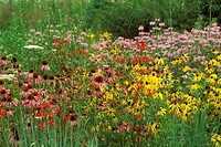 Mixed-Wildflower-Profusion-at-Prairie´s-Edge,-Mt.-St.-John-Bergamot-Prairie,-OH