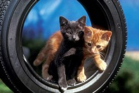 Kittens-in-tire