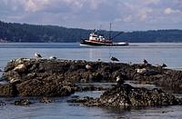 Fishing boat sailing on river, San Juan Islands, Washington, USA