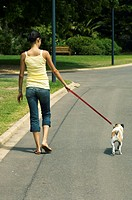 Young woman walking jack russell terrier on street, rear view