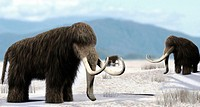 Mammoth. Artist´s impression of a herd of mammoths (Mammuthus sp.). The mammoth was a large mammal adapted to the cold conditions of the Pleistocene I...