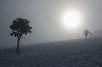 Climbing a snow-covered hill, backlight, lonely tree