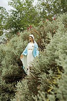 Virgin mary statue in a hedge