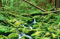 Brook near Sol Duc River in Pacific rainforest, Olympic National Park. Washington, USA