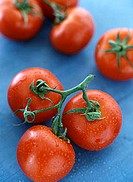 Vine tomatoes on blue background