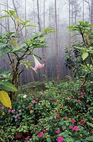 Tropical flowers in forest