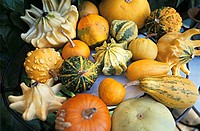 Assorted mini-pumpkins