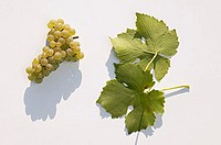 White wine grapes, variety ´Muskat-Ottonel´