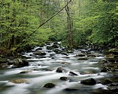 USA, Tennesse, Great Smoky Mountains NP, Little Pigeon River