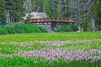 USA, California, Sierra Nevada Range, bridge crossing meadow stream