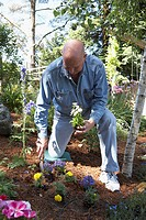 Mature man gardening in the backyard