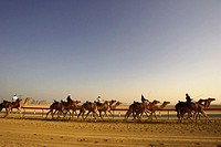 United Arab Emirates, Dubai, Nad-al-Sheba Club, men riding camels