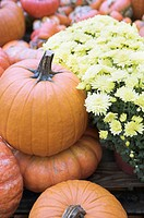 Pumpkins and yellow flowers, close-up