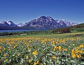 USA, Montana, Glacier National Park, flowers and St. Mary Lake
