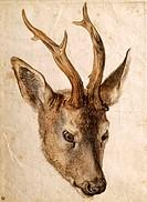 fine arts - Dürer, Albrecht 1471 - 1528, painting, ´Rehbock mit Gehörn´, ´haed of a stag´, circa 1503, watercolour on paper, 22,7 cm x 16 cm, Bonnat M...