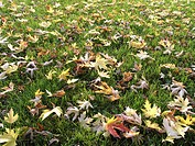 leaves, autumn, meadow, foliage, nature