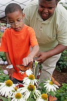 Alabama, Huntsville, Botanical Gardens, Butterfly House, flowers, Black father, son,