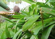 Man resting in hammock, plant in foreground