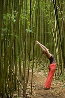 Woman practicing yoga in bamboo grove, arms raised, side view