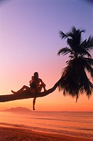 Couple sitting on palm tree at sunset