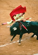 Bull with multiple banderillas in his shoulders charges through a Matador's red cape during a bullfight  Mexico City, Mexico