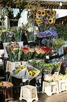 France, Cote d´Azur, Alpes-Maritimes, Nice, flower market