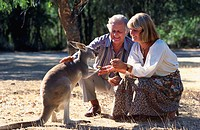 Tourists Feeding Kangaroo