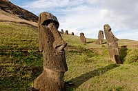 Rano Raraku is a volcanic crater formed of consolidated ash, or tuf. It is the quarry in which about 95% of the Island´s known sculpture (Moai) were c...