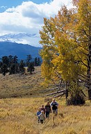 A family of five hiking in a meadow amidst fall color in Rocky Mtn Nat´l Park, CO.