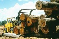 Logs stacked at sawmill, Marajo Island