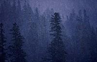 Heavy rain in Cascade Mtns., WA
