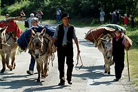 Two mid adult men and a boy walking with loaded donkeys on the road, Provence, France