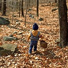 View from behind a young child carrying a basket of pine cones through the woods.
