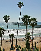 Palm trees on the beach and people in the water with the pier in the background  in San Clemente Beach, CA.