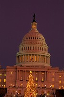 Illuminated Christmas tree in front of U.S. Capitol in the early evening twilight, Washington D.C.