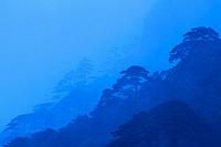 Mt. Huangshan Pine Trees