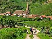 Family strolling among the vineyards of Niedermorschwihr. Alsace. France.