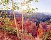 Tree Overlooking Bryce Canyon