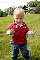 21 month old boy blowing a dandelion, Austria