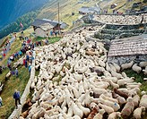 10030468, animals, beasts, sheep, Schafscheid, stoves, ranges, herd, fenced in, shepherd, Switzerland, Europe, Valais, Belalp,