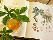 European Horse Chestnut tea (Aesculus hippocastanum)