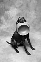 Dog Carrying Food Bowl
