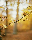 Book, branch, detail, abandoned, discolors,  dry up, fuzziness  Nature, vegetation, botany, forest, plants, trees, Fagur spec., Season autumn, autumna...