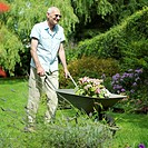 Senior man pushing a wheelbarrow of plants in the garden