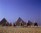 Scenic camel caravan, Great pyramids, Giza ruins, Cairo, Egypt