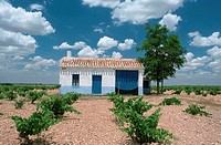 House, in, vineyard, La, Mancha, Spain