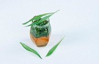 Honey, and, English, Plantain, leaves, Plantago, lanceolata, Narrow, Leaf, Plantain, indoor