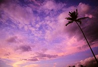 Gorgeous pink and purple sunset sky with single palm tree
