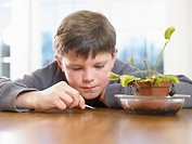 Boy (9-11) holding fly by venus fly trap
