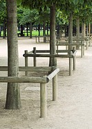 Park, line of trees with wooden barriers around them